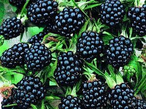 Фрукти і овочі, які здатні допомогти боротися з раком