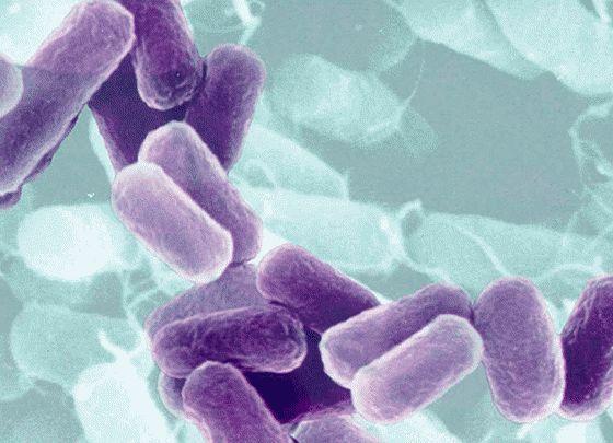 Роль корисних бактерій в здоров`я кишечника