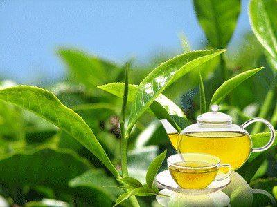 Зелений чай для здоров`я. Міф чи реальність?